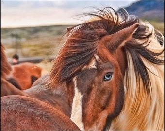 Portrait of Blue Eyed Pinto Icelandic Horse in Iceland