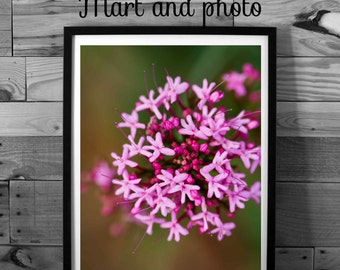 Flower photography, pink flower, color photography, nature photography, macro, instant download, home decor, printable art