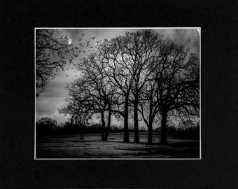 Photo Black and White Tree and Moon Texas