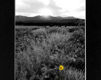 Landscape Photography Flagstaff Arizona