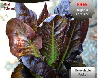Super Red Romaine Lettuce Heirloom Seeds Packet
