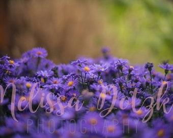 Premium Fine Art Print - Warm Purples, V1
