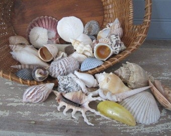 Sea Shell Lot Everything Different Shapes And Species Nautical Decor Craft Supply 1-1/4 Lbs. Sea Shells