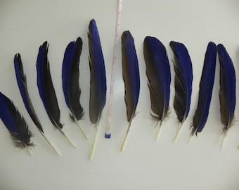 Blue Parrot Feathers