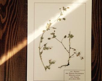 Herbarium 22