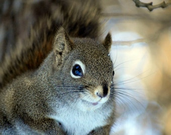 Photo of a squirrel