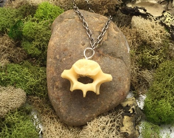 Raccoon Vertebra silver chain Necklace real bone
