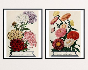 Art Print Flower, Flower Seed Packets, Magazine, Catalog, Floral Art, Lithograph Print, Antique, Phlox, Strawflowers, Flower Illustration