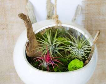 Hanging Air Plant Terrarium