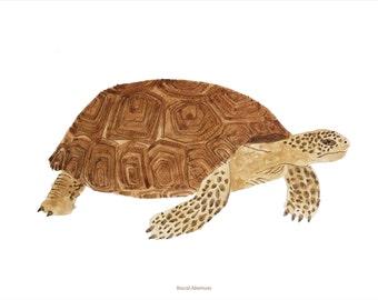 Turtle, A4 print
