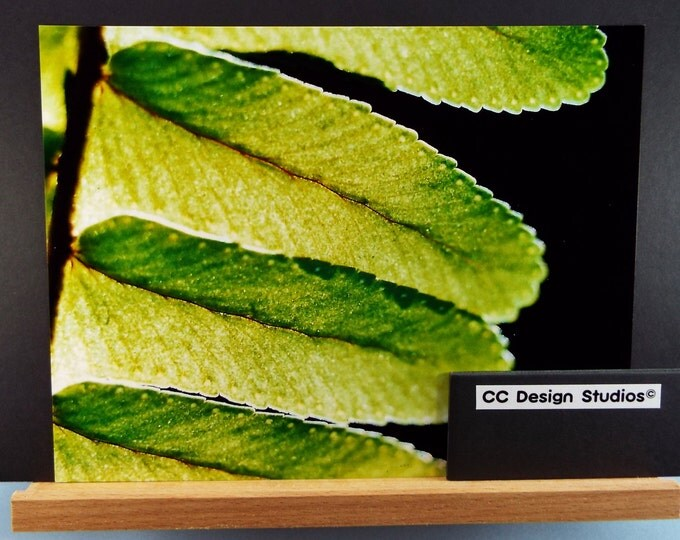 Fine Art Photography - Nature Series Ferns / Titled 'Sun Kissed Fern' / for Office-Home Wall Art Collection / Full Color 8x10 Photo