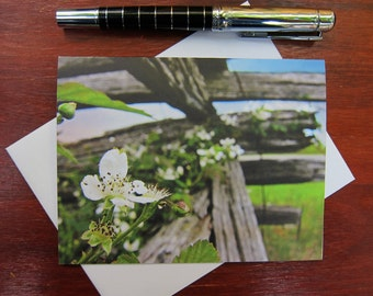ONLY 1 LEFT! 6 Blank Note Cards - Dewberry Flowers - Nature Photography