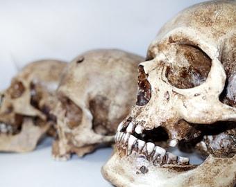 "Skulls on demand ""Pure patina"""