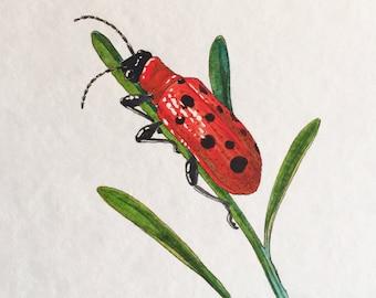Eliot the Asparagus Beetle