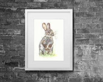 A4 'Wild Rabbit' Woodland Watercolour Giclée Animal Print