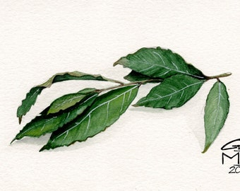 Orginal Leaves Watercolor Nature Illustration Laurel Bay Tree Painting