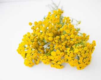 Tanacetum vulgare. Dried flowers, home decor, medicinal plant, floristry.