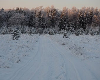 Winter nature nordic snow photography