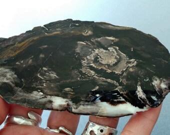 Polished Slice Petrified Wood Slice Specimen Agatized Wood