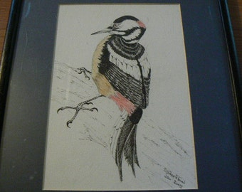 Woodpecker art from Sheila Appleford with Pen & Wash
