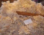 Coopworth Cross Raw Wool Lamb's Fleece, 1 lbs 11 ozs