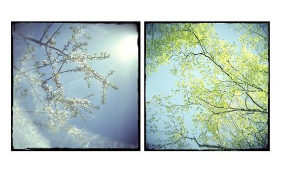 Spring Sky Landscape Photography, Pear Blossoms, Chartreuse  Turquoise Decor, Fine Art Print Set, Nursery Art Set,  Holga, Lomography