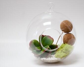Horton Spheres 6 pack // Terrarium Element