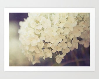 flower photography-white hydrangea- feminine- A Touch Of Light fine art photograph- white and purple- romantic wall art- cottage chic photo