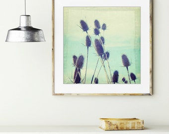 Botanical photography print robins egg blue aqua brown modern rustic nature wall art 'Teasel'