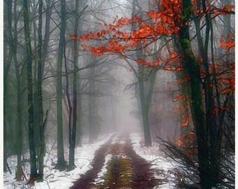 On Sale Autumn Landscape,  Nature, Trees, Forest,  Woodland, Fine Art Print, Seasonal Art, Home Decor, Wall Art,
