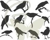 Bird Digital Vintage Silhouette Illustrations Clip Art Printable Package Image Download Set 1
