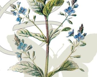 Wildflower Botanical Illustration Digital Flower Download Printable Clip Art Image