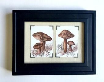 Framed Original Mushroom Art, Original Mushroom Ink Drawings, Colored Ink Mushroom Drawings, 5 x 7 Drawing, Framed Original Art Drawings