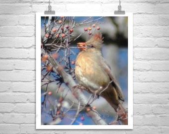 Red Cardinal Bird Photography, Bird Art, Wildlife Photography, Bird Art, Vertical Art, MurrayBolesta, Arivaca, Arizona Birds, Bird Prints