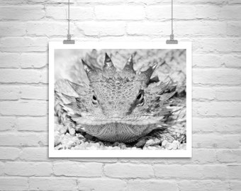 Horny Toady, Horned Lizard, Nature Photography, Desert Lizards, Horned Toad, Lizard Picture, Reptile Art, Wildlife Art, Black and White