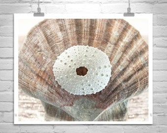 Neutral Tones, Ocean Art, Sea Urchin Art, Sea Shell Print, Bathroom Picture, Shell Photo, Seashell Art, Bathroom Decor, Seashell Photograph