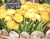 "Paris Photography, ""Yellow Ranunculus"" Paris Print, Large Art Print Fine Art Photography"
