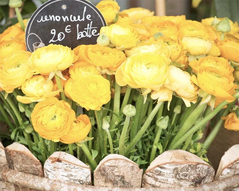 "Paris Photography, ""Yellow Ranunculus"" Paris Print, Large Art Print Fine Art Photography, Yellow Wall Art for College Student Gift"