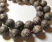 Something New Very Showy Fossil Satin Matte Turritella Shell Calibrated Big 20mm Round Rondelle Beads