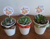RESERVED for Heather D, 60 Succulent Rosettes, White Ceramic Pots and Custom Tags