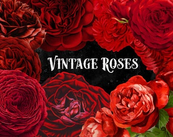 Vintage Red Roses, Watercolor clipart