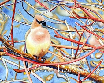 Cedar Waxwing Original oil painting bird art nature wildlife fine art