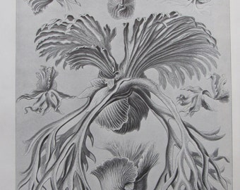 Vintage 1974 Bookplate, Ernst Haeckel, Ferns/Radiolaria, Black and White Print, Book Page, Wall Art, Sea Life Print