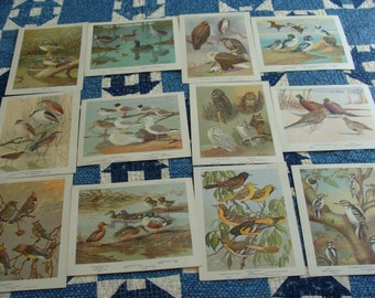 12  Vintage Bird Cards .... Great to work with ... Lot 2