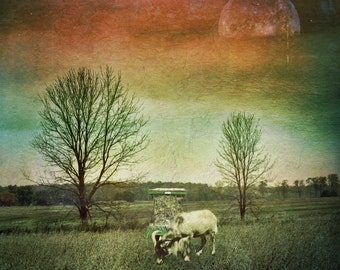 full moon fine art photo animal, landscape photography, dramatic home decor, living room wall large canvas, green teal, goat, surreal quirky
