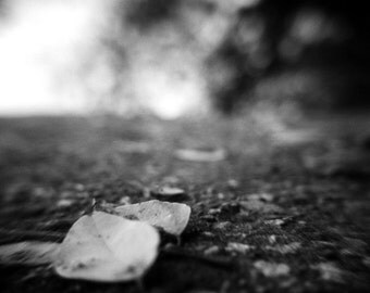 leaf art photo, fine art, black and white, holga, minimalist, zen, macro, path fall autumn, home decor living room wall art, fallen leaves