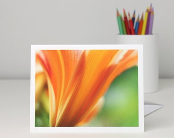 Floral photo note card, Hall's Pink Daylily flower photography blank notecard stationery, a2 or a7