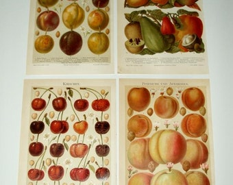 SET of 4 ANTIQUE FRUIT prints,peaches,apricots,cherries,plums, 1895 chromolithograph,tropical,red,orange,avocado,purple,yellow