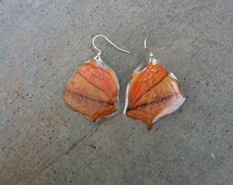 Butterfly Wing Earrings, Orange Earrings, Moth, Real Cruelty Free Wings, Insect Jewelry, Bohemian Boho Gypsy, Unique Gift BW009