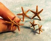 REAL Starfish Earrings Sea Star Earrings Stud Earrings gold or silver posts Florida Starfish Gift for Her Beach Wedding Seashell Jewelry